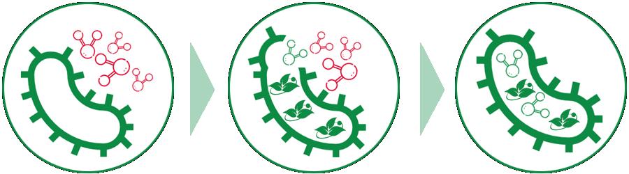 grow-icon-1